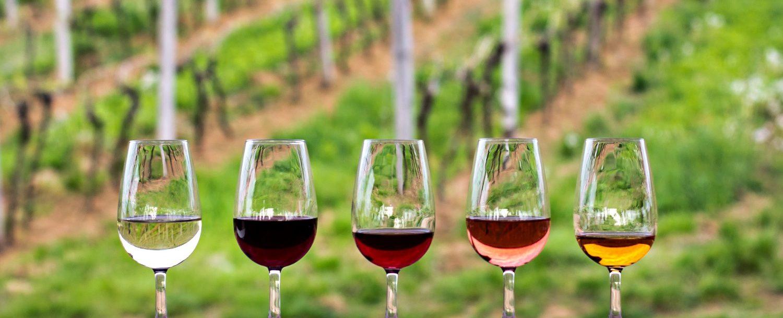 wine glasses in front of vineyard